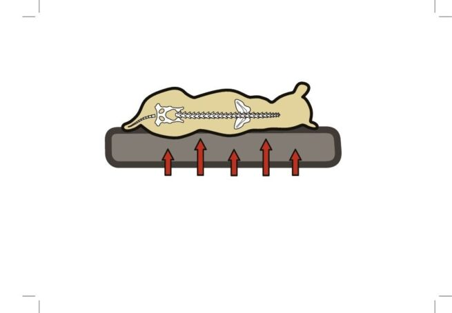 Hondenmand Ortho Ovaal Grijs 72CM-21213