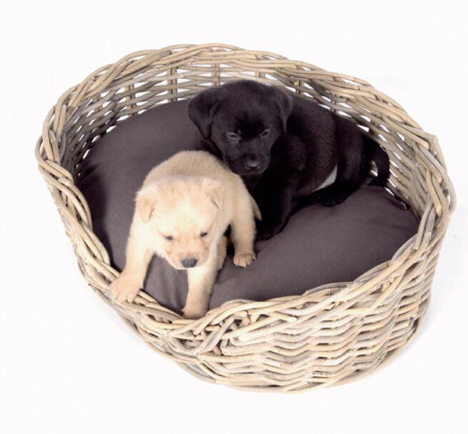 Hondenmand Surplus Rotan Basket-9542