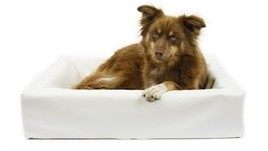 Hondenmand Bia Bed Wit-13391