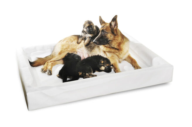 Hondenmand Bia Bed 7 Wit 120cm-0