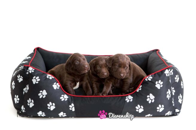 Hondenmand My Paw Zwart -0