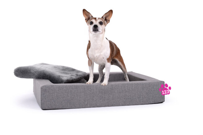 Hondenmand Dream Rectangle Zilver-14826