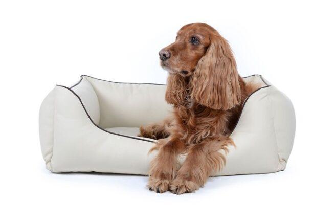 Hondenmand Ultimate Dream Crème-0