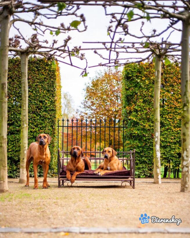 Hondenbank & Hondensofa Hondenbank Romantic Lex & Max