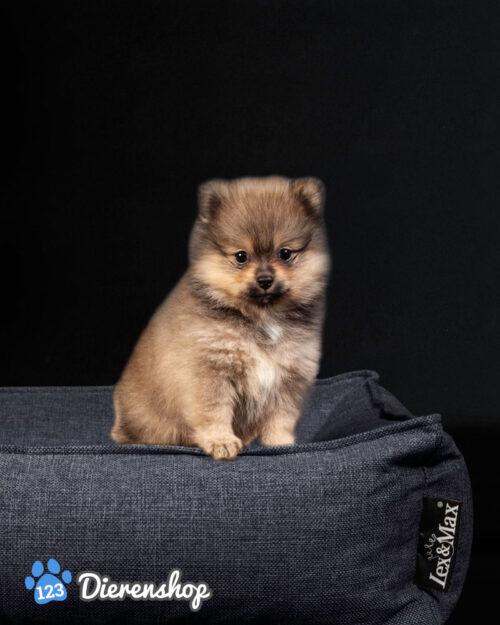 Hondenmand Hondenmand Lex & Max Paris Antraciet