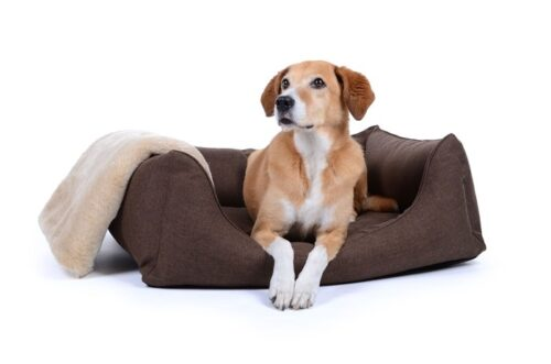 Hondenmand Soft Dream Deluxe Bruin-0
