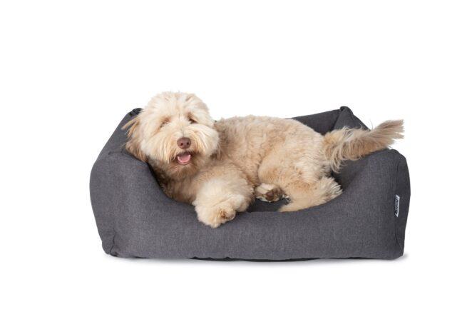Hondenmand Rebel Petz Box Charcoal Grijs-21022